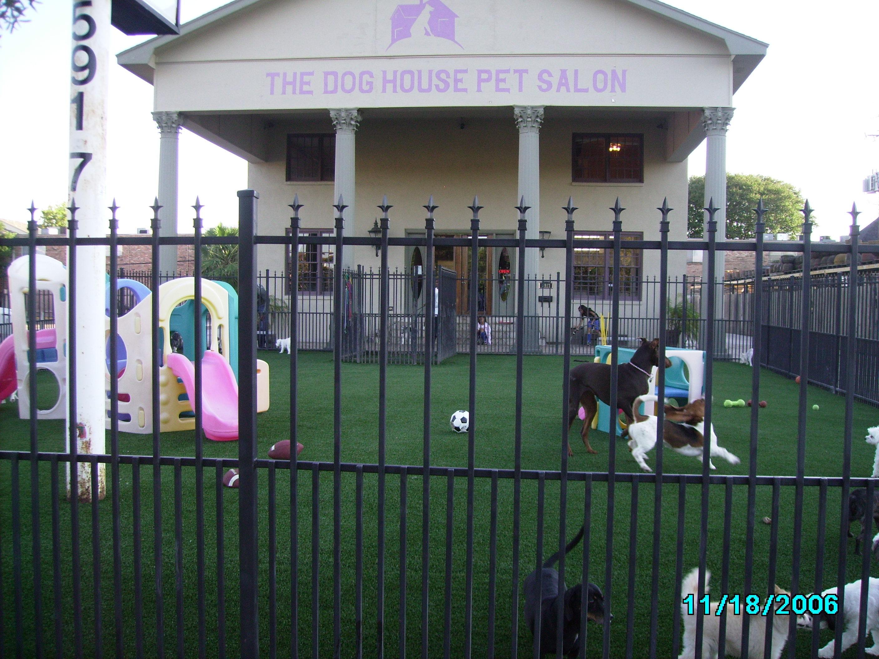 Photo gallery artificial grass k9grass by foreverlawn for The dog house pet salon