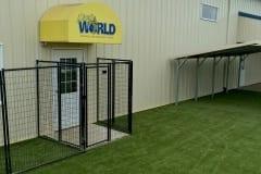 K9Grass at Dog World Daycare