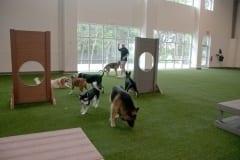 Unleashed Indoor Dog Park inDallas