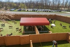 Best Friends Fur Ever Pet Facility- Cokeysville, Maryland