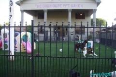 K9Grass Installed at The Dog House Pet Salon