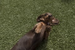 2nd Family Dogs by ForeverLawn West Texas
