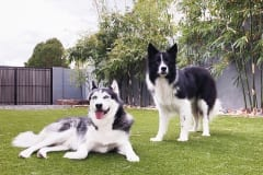 K9Grass by ForeverLawn East Valley