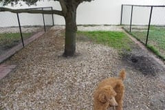 Before K9Grass Installation - Love My Dogs - ForeverLawn Palm Beach