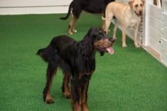 Savy Paws Pet Resort in Atlanta
