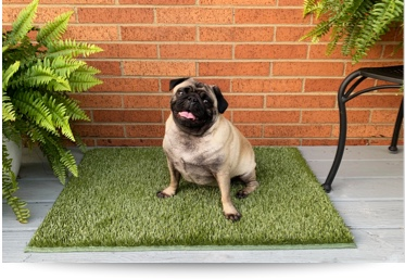 K9Grass Mats with Bound Edges