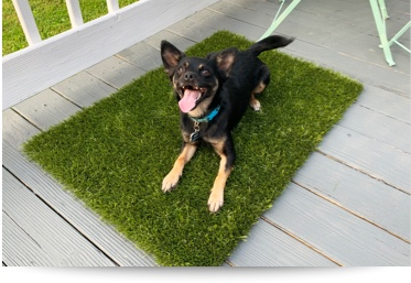K9Grass Mats with Unbound Edges