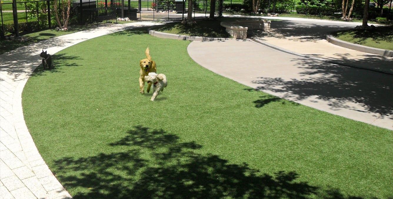 dog-parks-11