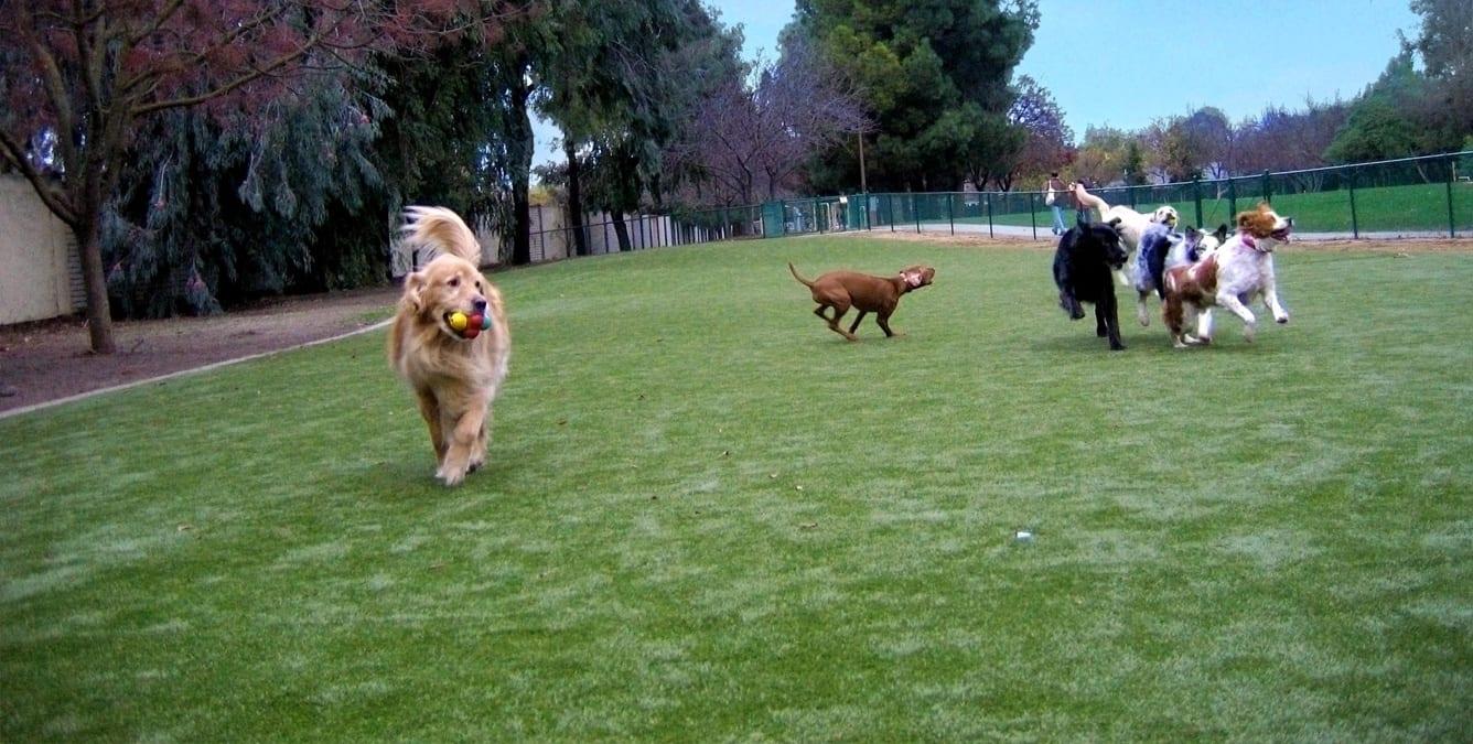 dog-parks-8