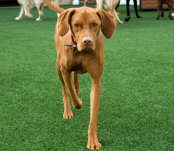 pet-facility-dog