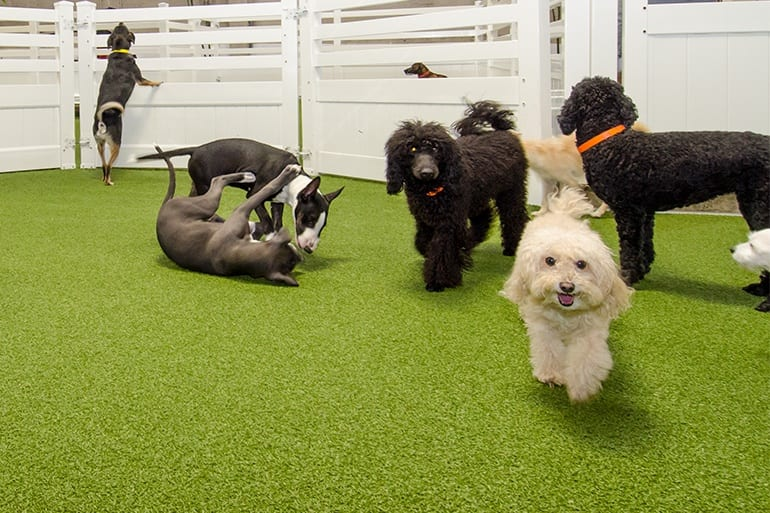 commercial pet facilities