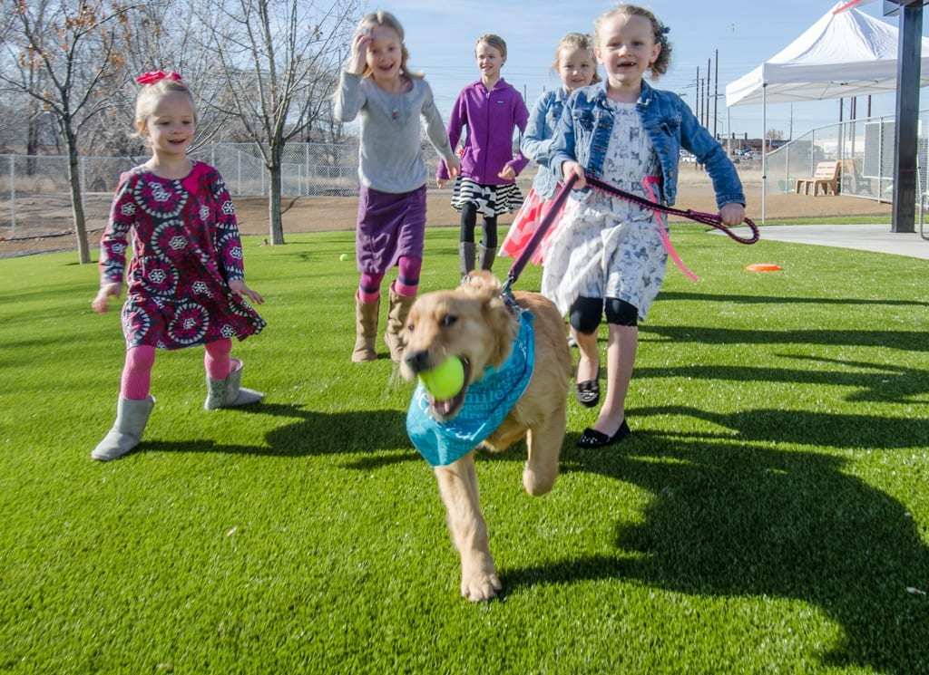 dog frolicking with children in k9grass