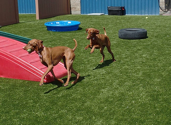 Tails Up Deluxe Pet Boarding And Dog Day Care