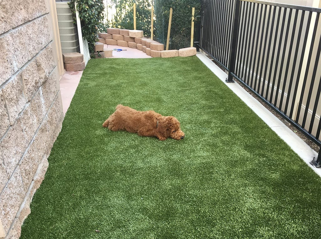 Dog laying on K9Grass by ForeverLawn in residential backyard