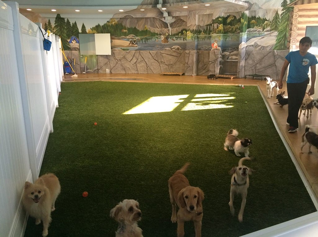 K9Grass play area for dogs at Doggy Daycare & More installed by ForeverLawn