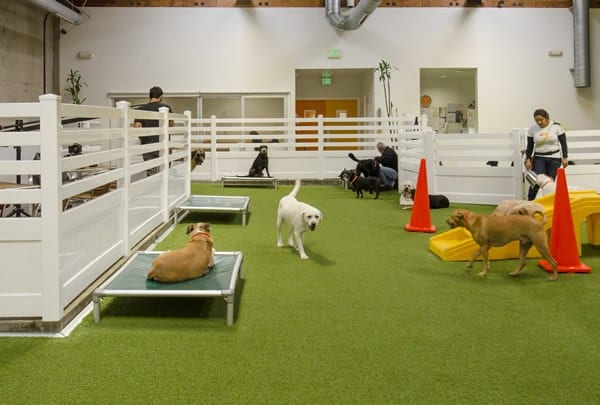 LA Dogworks dog resort with K9Grass Classic by ForeverLawn