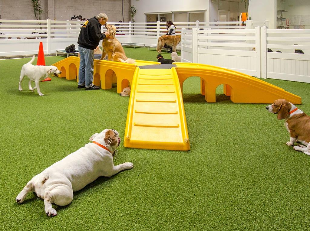 dogs enjoying playtime