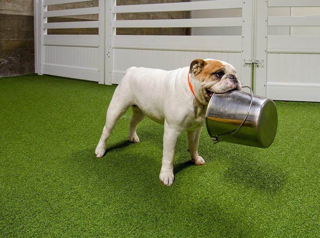 dog carrying bucket