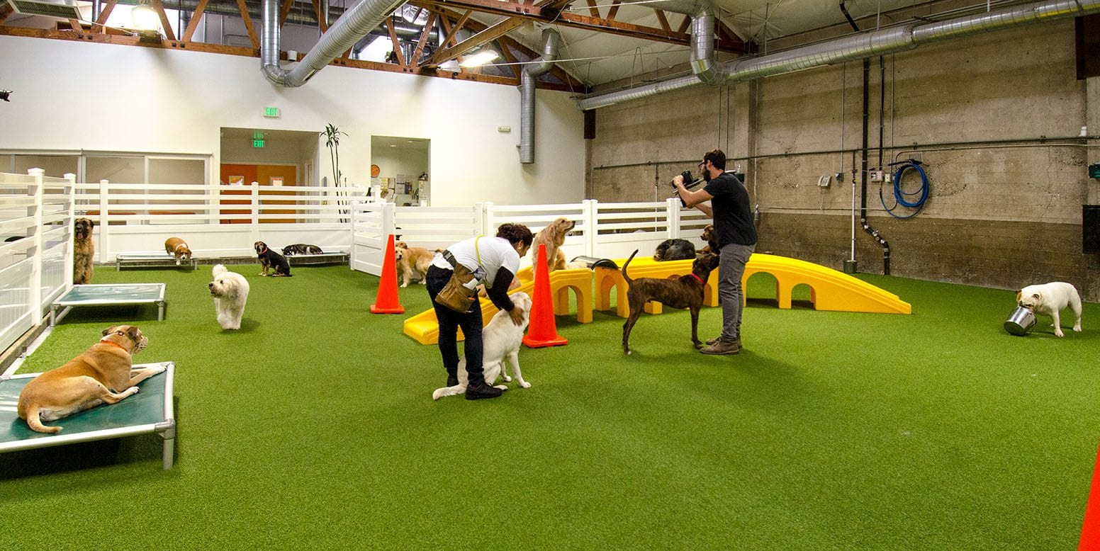 Dogs playing on K9Grass by ForeverLawn at LA Dogworks