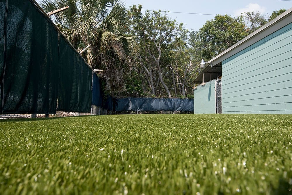 Close up of K9Grass by ForeverLawn at Bayshore Animal Hospital Exercise Yard