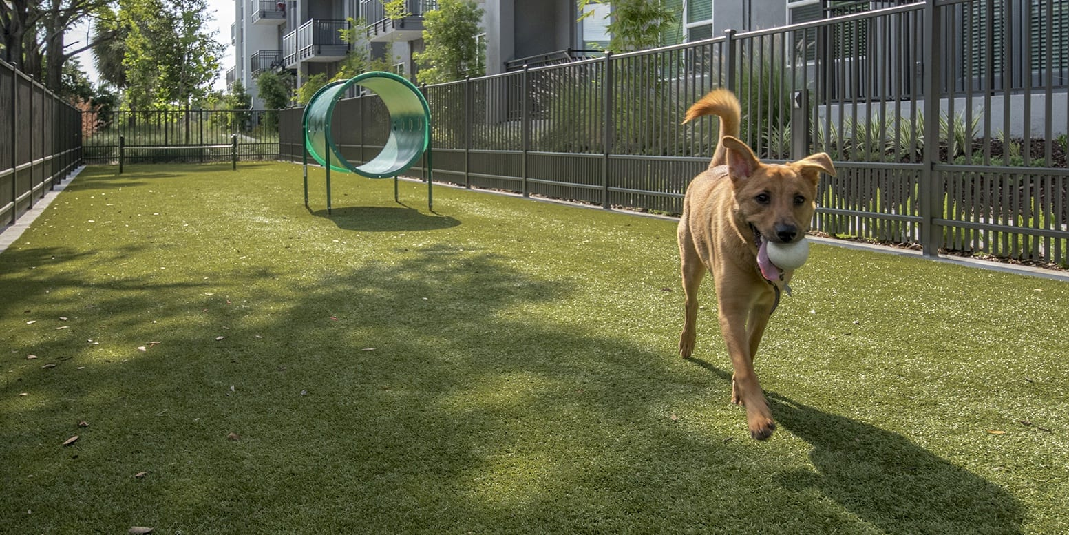Crescent Westshore Apartments Dog Park
