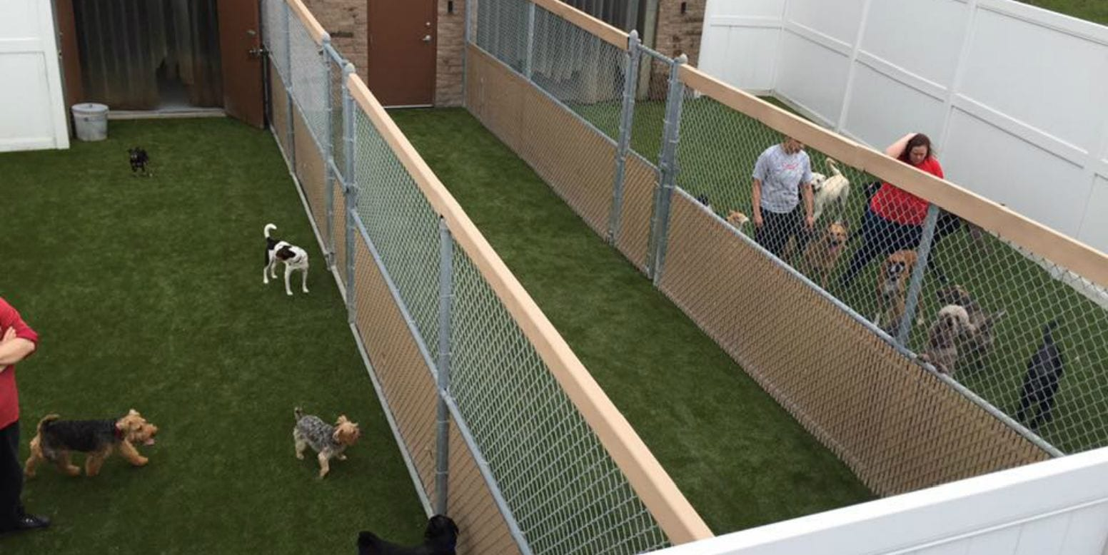 Dogs playing on K9Grass at Camp Bow Wow in Bedford Heights, Ohio