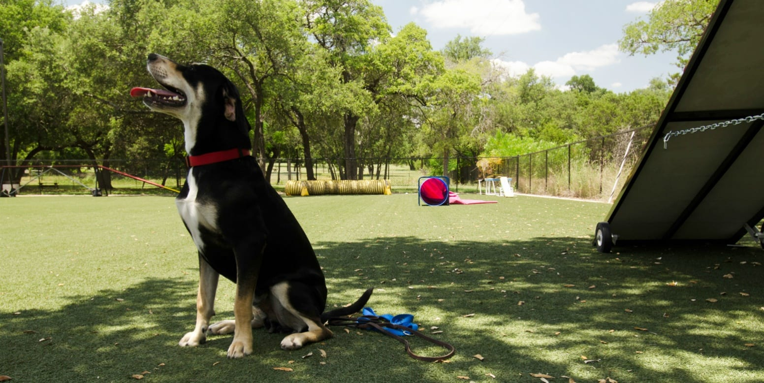 Dog sitting on K9Grass Lite at Austin Dog Alliance