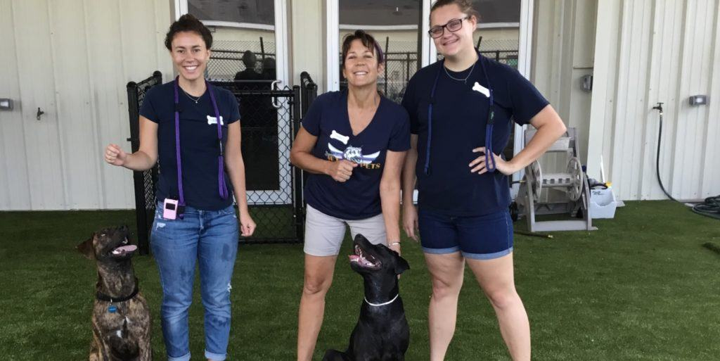 Beaches Jet Set Pets Jacksonville Fl K9grass By