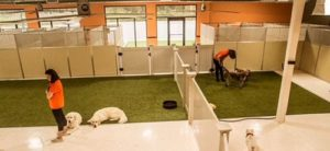 BARKS Dog Daycare Interior