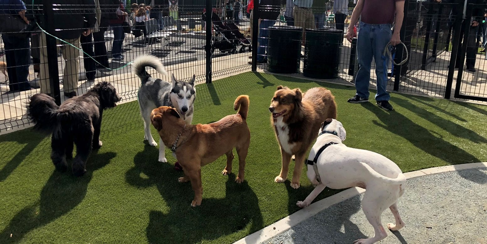 Dogs enjoying K9Grass at Signal Hill Dog Park ribbon cutting ceremony in Long Beach, California