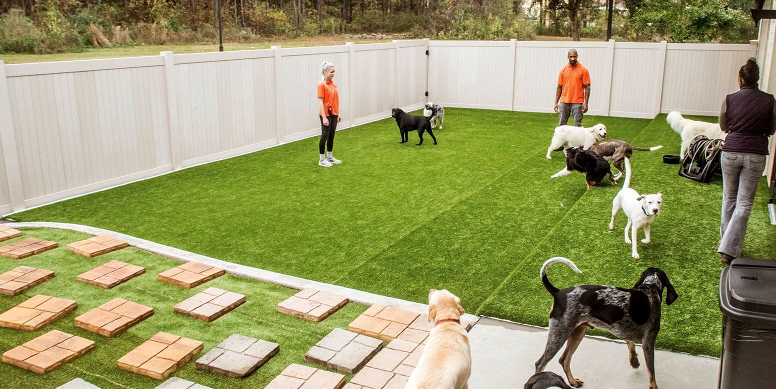 Dogs playing on K9Grass Lite outdoor yard at BARKS Dog Daycare in Savannah, GA