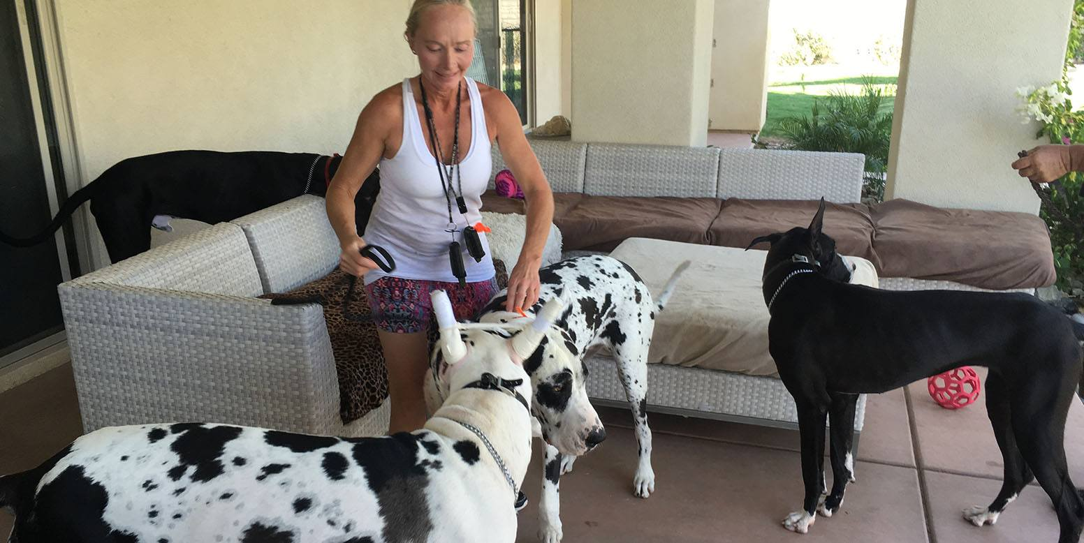 Indio, CA homeowner with Great Danes who love the new K9Grass Classic installed by ForeverLawn Pacific Coast