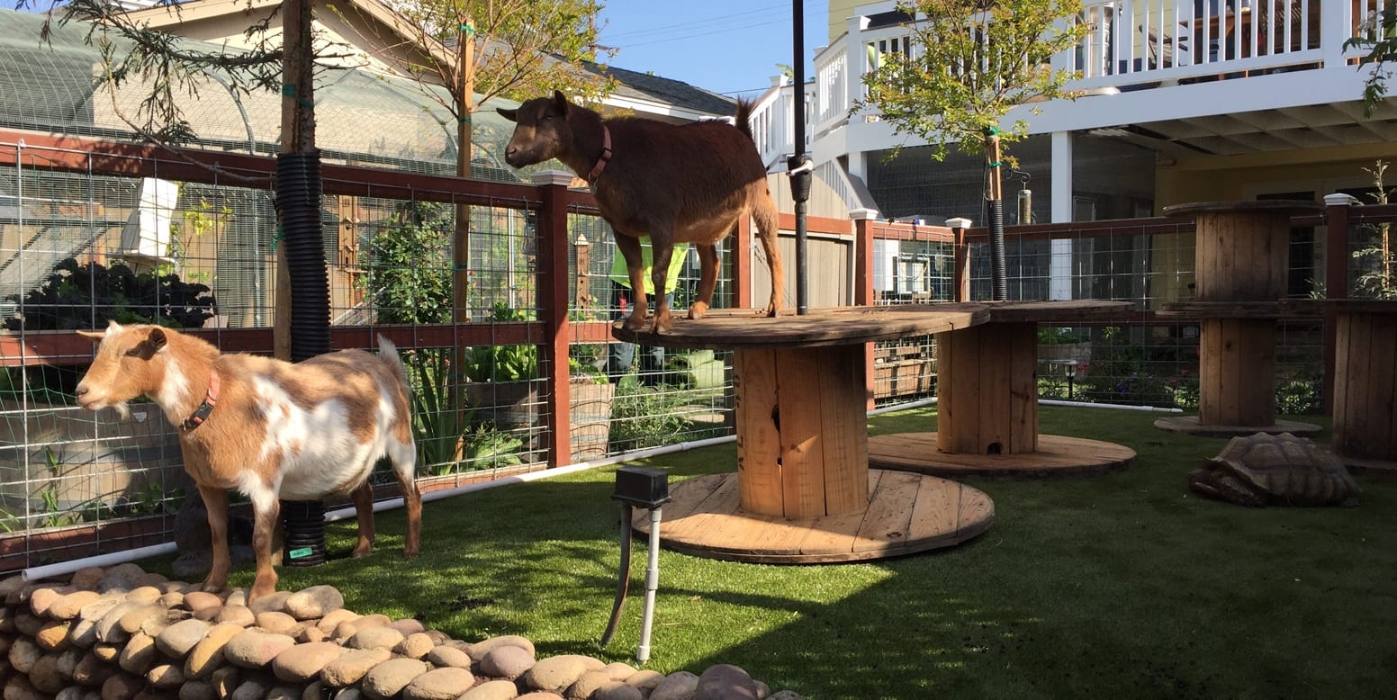 San Diego residence with K9Grass® Classic for goats and a tortoise