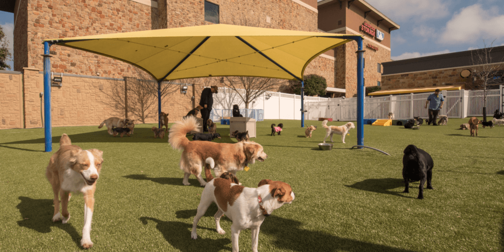 Dogs playing on K9Grass by ForeverLawn at 2nd Family Dogs boarding and grooming facility in McKinney, TX