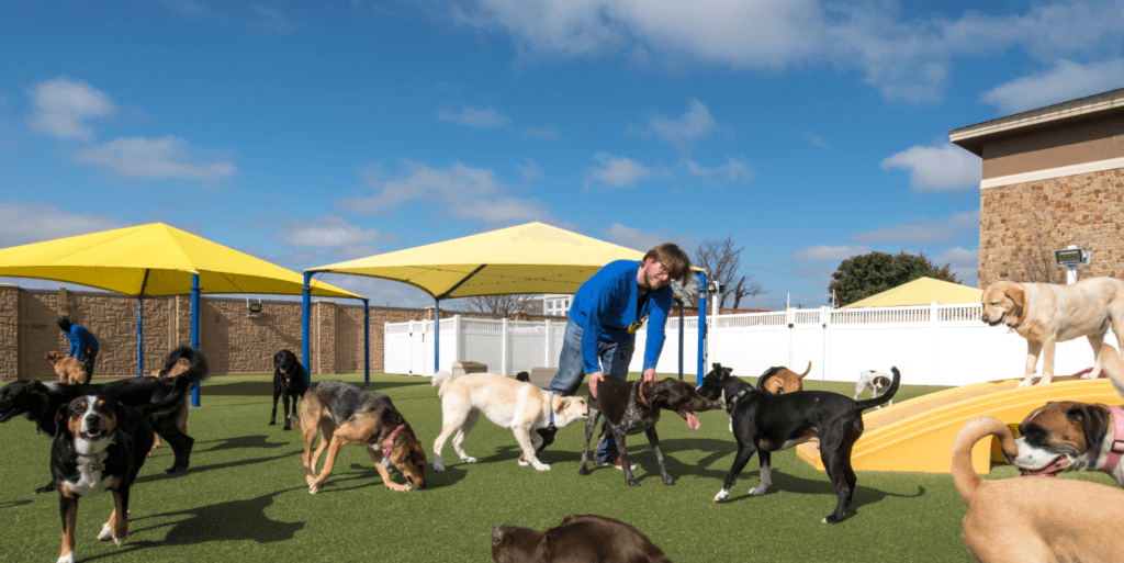 Dogs playing on K9Grass by ForeverLawn at 2ndDogs boarding and grooming facility in McKinney, TX