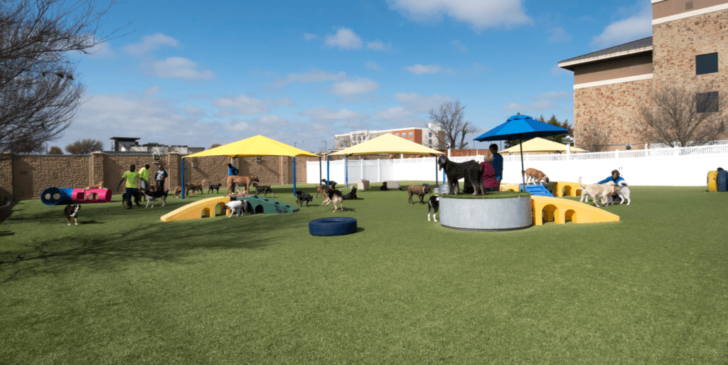 2nd Family Dogs boarding and grooming facility in McKinney, TX, featuring K9Grass by ForeverLawn