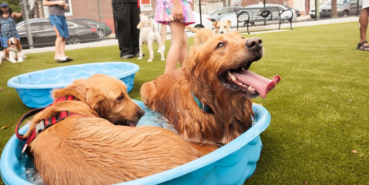 Dogs in the pool at the Lanier Playground Dog Park in Philadelphia, PA, featuring K9Grass by ForeverLawn