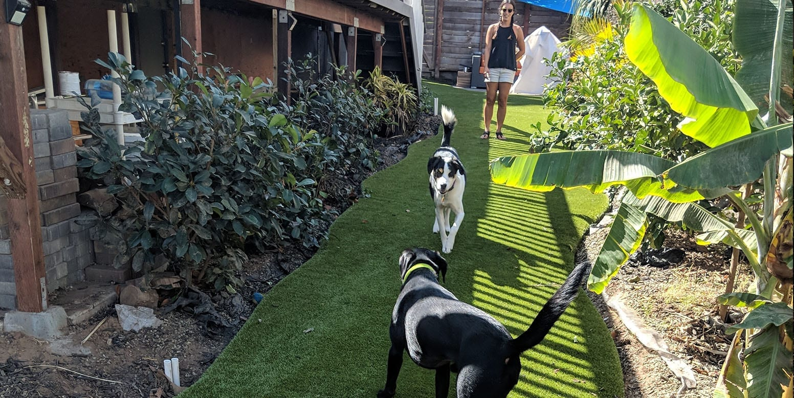Dogs playing on K9Grass by ForeverLawn at a San Diego residence