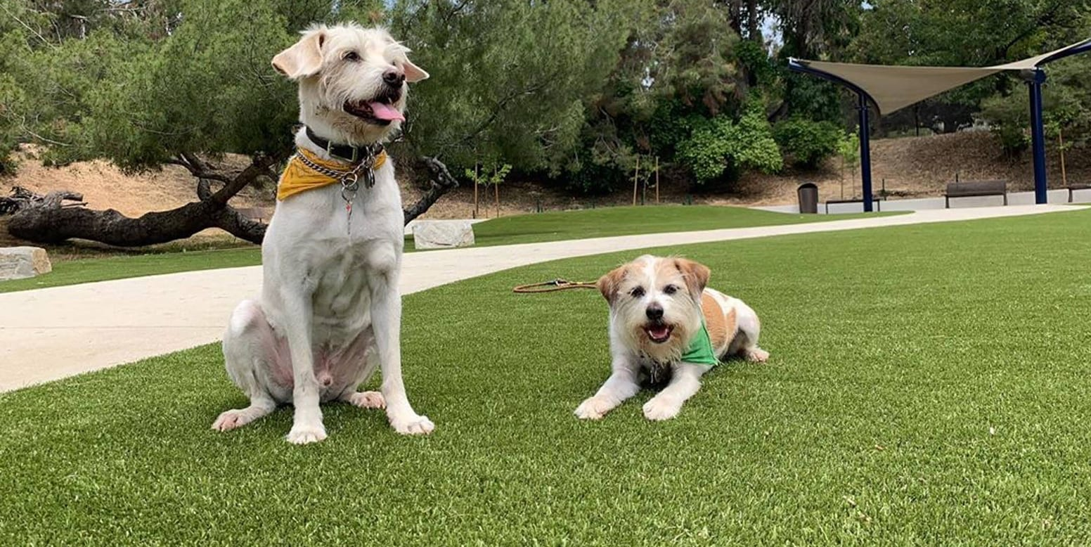 Dogs on a Rock at Eagle Rock Dog Park featuring K9Grass synthetic turf