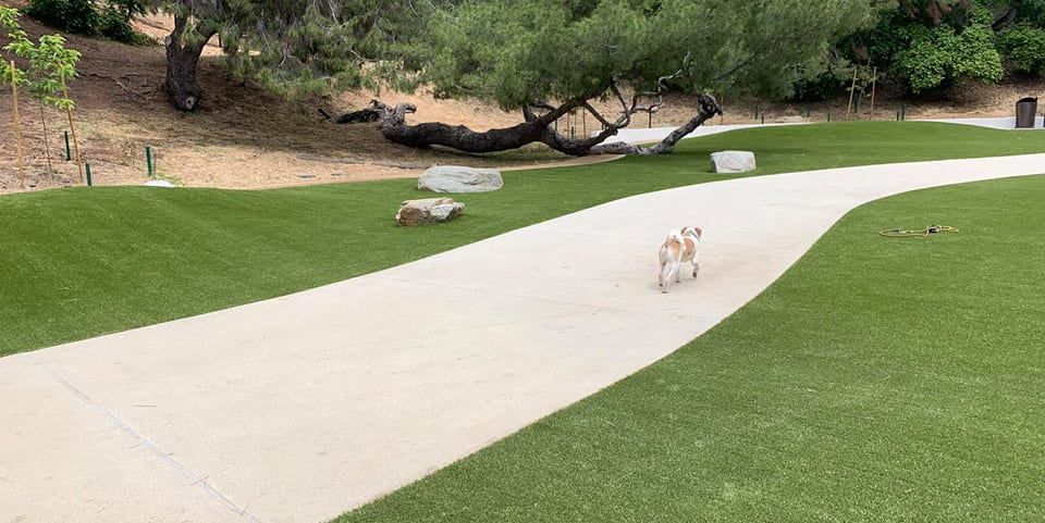 Dog walking on a sidewalk at Eagle Rock Dog Park featuring K9Grass synthetic turf