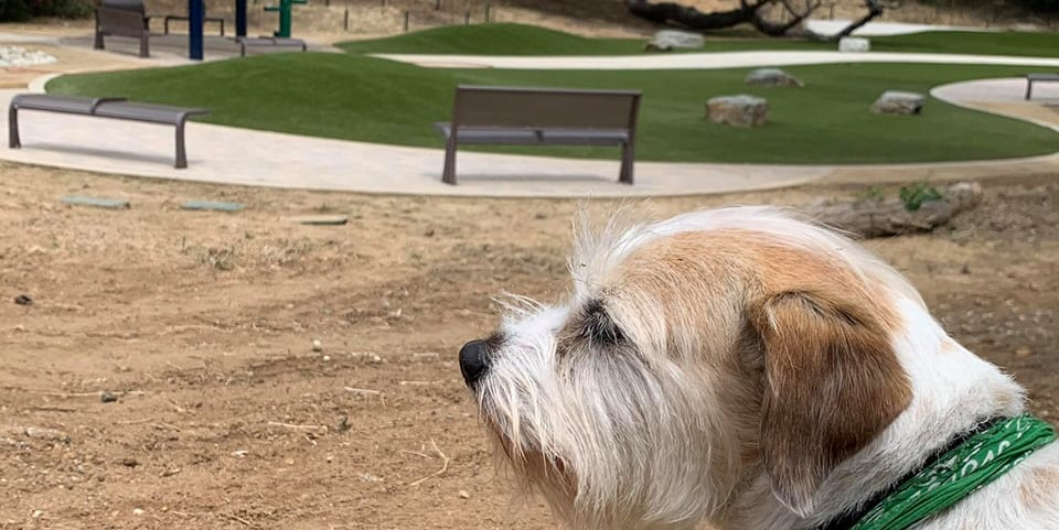 A dogs at Eagle Rock Dog Park featuring K9Grass synthetic turf