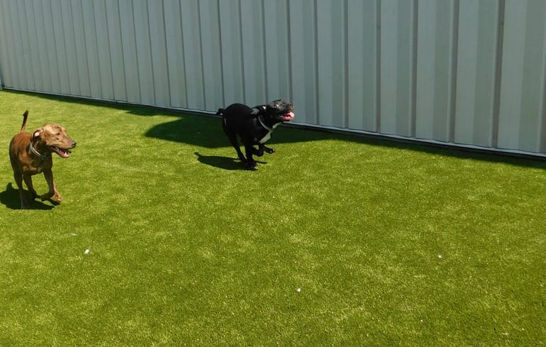 Dog play yard featuring K9Grass Classic at the Humane Society of Summit County