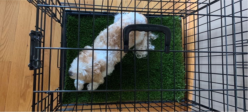 mat in cage