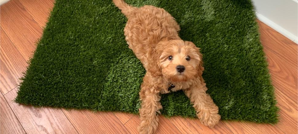 puppy on mat